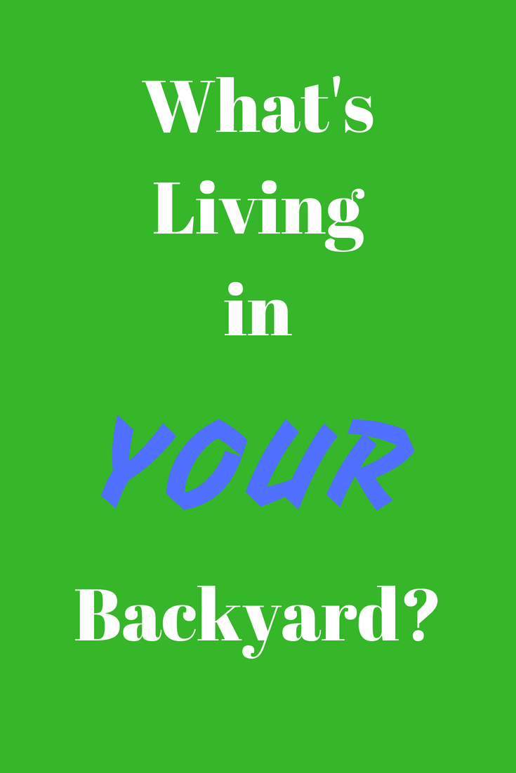 What's living in your backyard?
